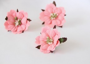 Пионы Розовоперсиковые тёмные 5-6 см, 1 шт.