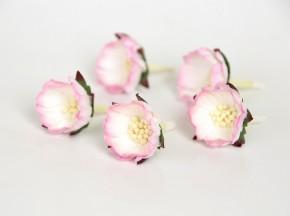 Шиповник Розовый+белый, 1 шт.