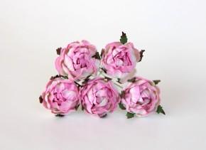 Ранункулюсы Розовый + белый, 1 шт.