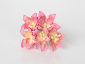 Лилии мини Розовый + желтый, 1 шт