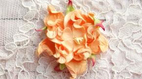 Гардении 7см персиковые