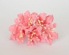 Лилии коралловые, 1 шт.